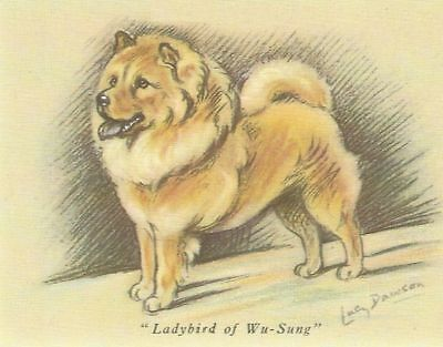 Chow Chow Puppy - MATTED Dog Print - Lucy Dawson