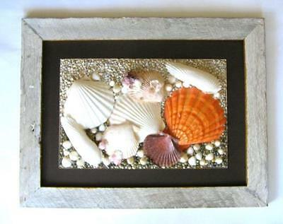 Large Sea Shell Art Beach Decor   Distressed Vintage Wooden Frame