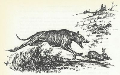 GREYHOUND / WHIPPET - 1964 Dog Art Print - MATTED
