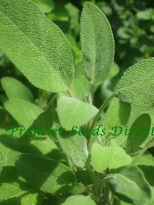 Herbs - Sage - Broad Leaved - 30 Seeds ** Free Uk P&p**