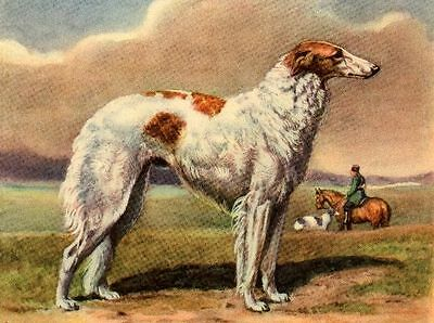 Borzoi - Dog Art Print - Megargee MATTED