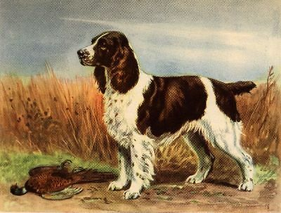 English Springer Spaniel - Dog Art Print - Megargee MATTED