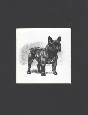 French Bulldog - Dog Art Print - Megargee MATTED