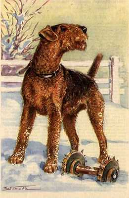 Airedale Terrier - MATTED Dog Art Print - German / NEW U