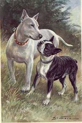Bull and Boston Terrier - MATTED Dog Art Print - German / NEW U