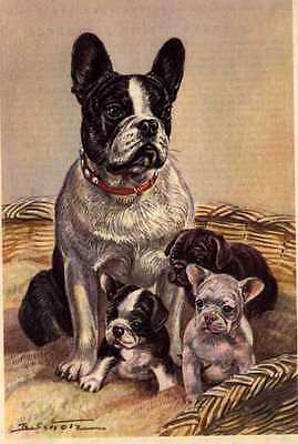 French Bulldog - MATTED Dog Art Print - German / NEW U