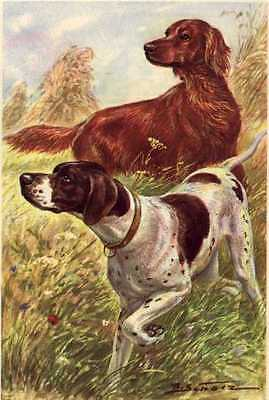 Irish Setter and Pointer - MATTED Dog Art Print - German / NEW U