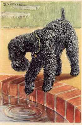 Kerry Blue Terrier - MATTED Dog Print - German  NEW U