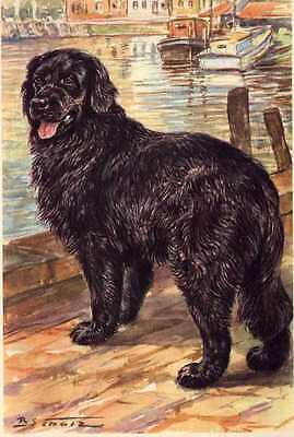 Newfoundland - MATTED Dog Art Print - German / NEW U