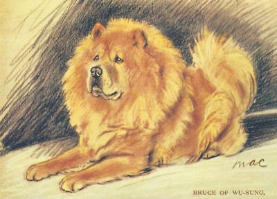 Chow Chow - MATTED Dog Print - Lucy Dawson NEW