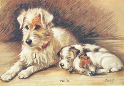 Fox Terrier Pups - MATTED Dog Print - Lucy Dawson NEW