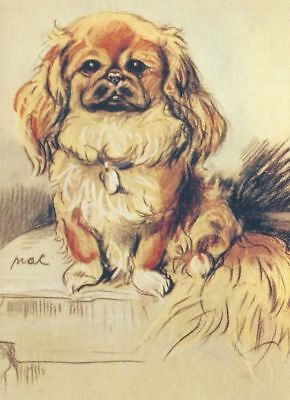 Pekingese - MATTED Dog Print - Lucy Dawson NEW