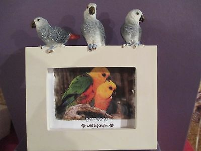African Grey Parrot ~   Frame  ~ #10