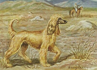 Afghan Hound - Vintage Color Dog Print - MATTED