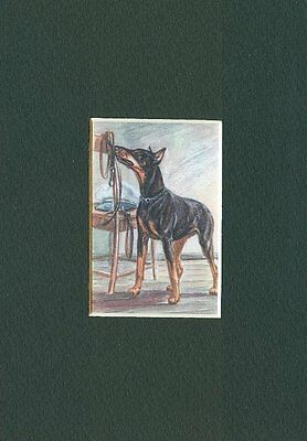 * Doberman Pinscher - Dog Art Print - CLEARANCE
