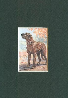 * Irish Wolfhound - Dog Art Print - CLEARANCE