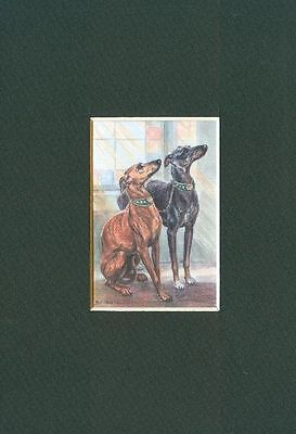 * Whippet - Dog Art Print - CLEARANCE