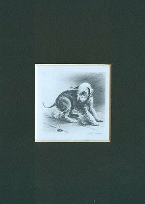 ** Bedlington Terrier - Dog Print - M. Dennis CLEARANCE