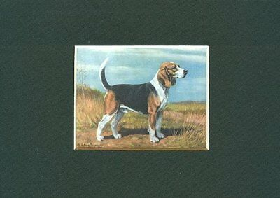 - Beagle - Dog Art Print - Megargee CLEARANCE