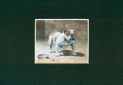- English Bulldog - Dog Art Print - Megargee CLEARANCE
