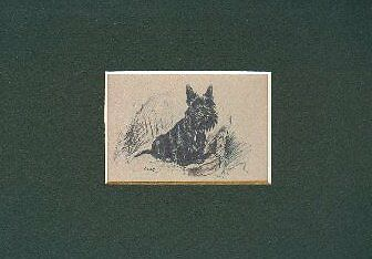 -- Scottish Terrier - Dog Art Print - Dawson CLEARANCE