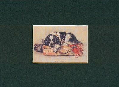 --- English Springer - Dog Art Print - Dawson CLEARANCE