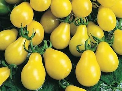 Vegetable Tomato Yellow Pear / Cherry Bell 400 Seeds