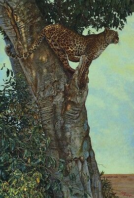LEOPARD ART PRINT - On the Lookout by Kalon Baughan 52x36 Oversize Huge Poster