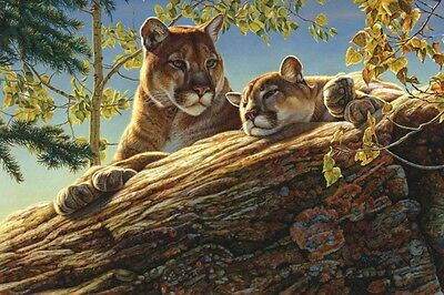 LION ART PRINT - Keeping Guard by Kalon Baughan 34x26 Wildlife Cat Poster