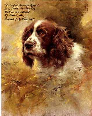 ** English Springer Spaniel Dog Print - Poortvliet