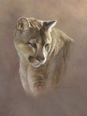 Watchful Eyes by Kalon Baughan Art Print Wildlife Poster 11x14