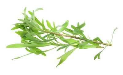 TARRAGON 'Russian' 150 seeds REPELS INSECTS culinary medicinal herb garden
