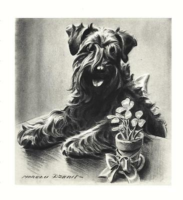 Kerry Blue Terrier - Morgan Dennis Dog Print - MATTED