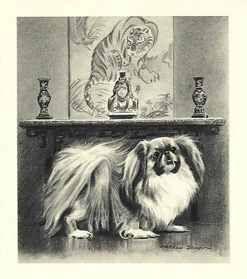 Pekingese - Morgan Dennis Dog Print - MATTED