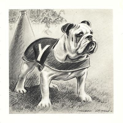 Yale Bulldog - Morgan Dennis Dog Print - MATTED