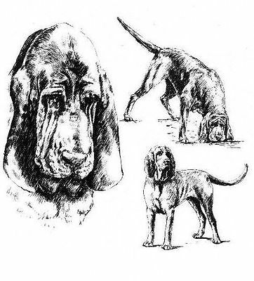 Bloodhound - 1963 Vintage Dog Print - Matted *