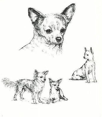 Chihuahua - 1963 Vintage Dog Print - Matted *