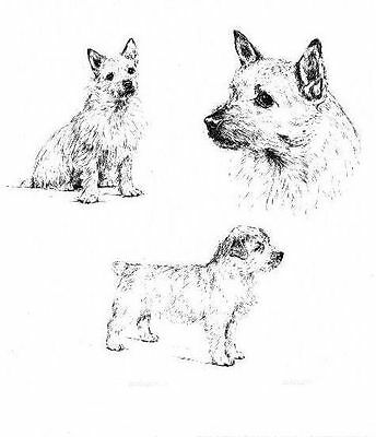 Norwich Terrier - 1963 Vintage Dog Print - Matted
