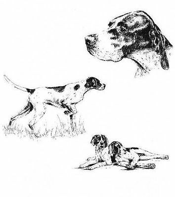 Pointer - 1963 Vintage Dog Print - Matted *