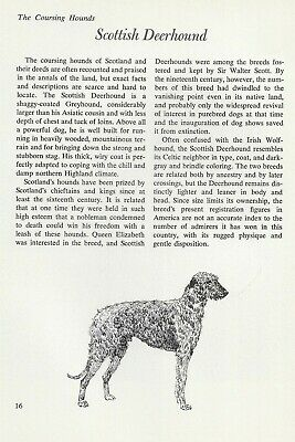 "The Scottish Deerhound - Vintage Dog Art Print - Matted ""G"""
