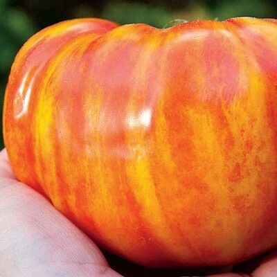 Vegetable Tomato Big Rainbow 100 Finest Seeds Beefsteak