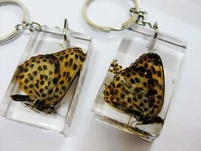 12pcs fashion insect real noble butterfly fritillary clear ice key-chains