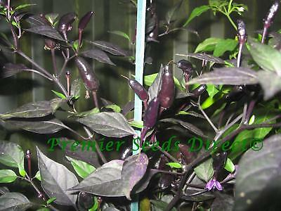 Vegetable  Hot Chilli Pepper Royal Black  60 Finest Seeds