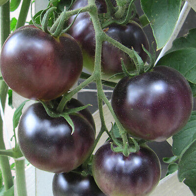 Organic Vegetable Tomato Black Cherry 60 Finest Seeds