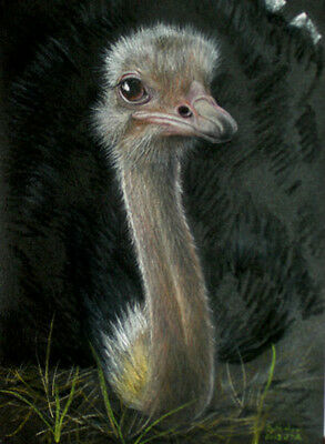 Original Pastel Drawing Ostrich Wild Bird Australia Sally Porter Wildlife Art