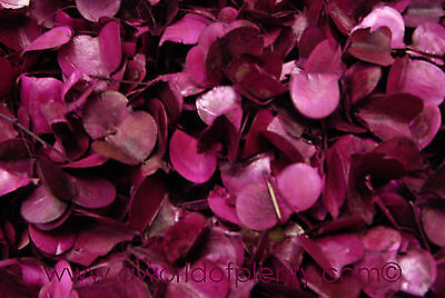 Windy Pods - Bright Pink Winged Pods Potpourri Ingredients -Bowl Filler