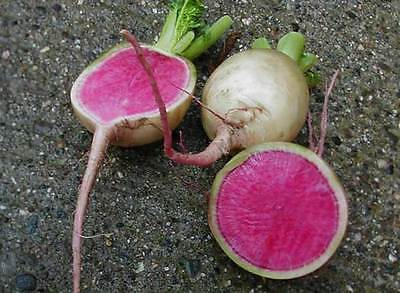 Radish Watermelon  Red Meat Winter  600 Finest Seeds
