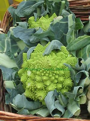 Vegetable  Cauliflower Romanesco Ottobrino  2200 Seeds  Italian