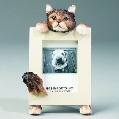 Maine Coon Cat ~ Picture Frame  16-6
