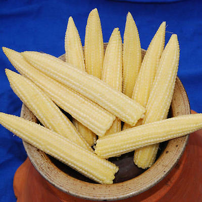 Sweet Corn Minipop F1 Miniture 140 Seeds
